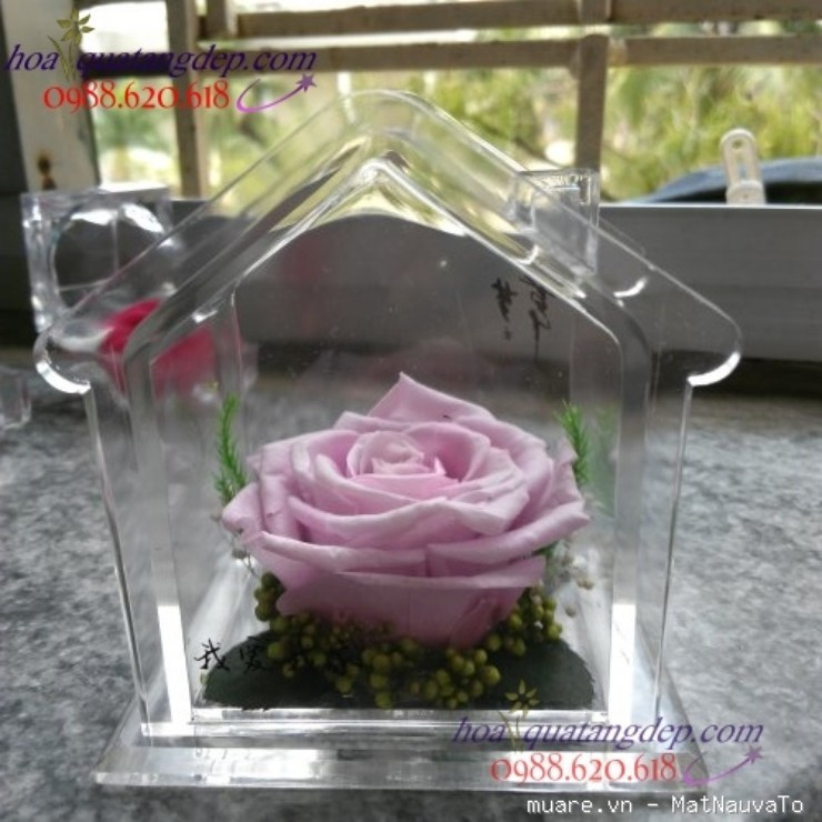 Hoa hồng bất tử, hoa hồng xanh hoa tươi 100%, 5 NĂM KHÔNG TÀN cùng nhiều món quà hấp dẫn khác