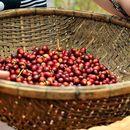 Cung cấp cà phê, bơ, tiêu tại Việt Nam