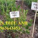 Cung cấp cây giống: cây sake, cây giống sa kê, cây giống phật thủ chuẩn, uy tín, giao cây toàn quốc