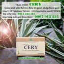Thảo dược CERY (trà Celery) mua ở đâu uy tín chất lượng
