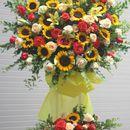 hoa tươi giá rẻ,giao hoa tận nơi miễn phí
