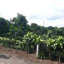 Cần bán nhanh lô đất 2 mặt tiện- trung tâm TP. Bảo Lộc