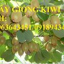 Cung cấp cây giống kiwi, giống kiwi quả xanh, giống kiwi quả vàng nhập khẩu chuẩn, uy tín