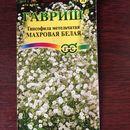 Hạt giống hoa Baby trắng nhập khẩu Nga