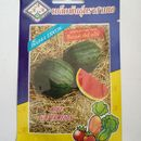 Hạt giống dưa hấu ruột đỏ không hạt hàng nhập Thái Lan