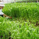 cung cấp rau sạch cho các nhà hàng quán ăn ở Hà Nội