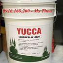 Yucca Schidigera In Liquid - Yucca nước, Yucca hấp thu khí độc